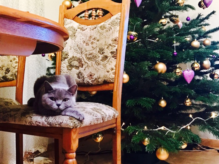 myliukamyliuka_vanda_christmas